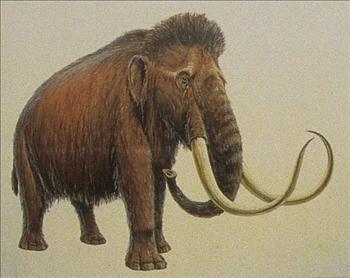 صور حيوانات منقرضة - صور حيوانات - حيوانات منقرضة - صور حيوانات انقرضت
